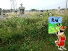 Morţii cu morţii: Drumul între DN 79 și cimitirul din Nojorid, presărat cu buruiene înalte de 2 metri! (FOTO)