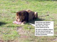 Leul Țuțu a slăbit drăguțul…