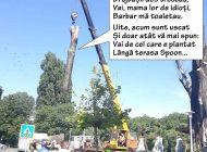 Misiune îndeplinită: Plopul de lângă Spoon s-a uscat cu totul! (FOTO)