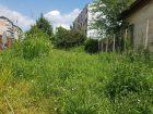 Grădina sălbatică: Bălării înalte de jumătate de metru, la sediul Poliţiei Municipiului Oradea (FOTO)